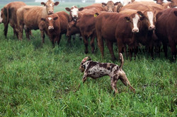 Wesson on yearlings