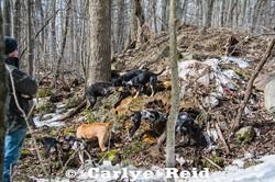 2017 Rev X Nifty pups at a ground de