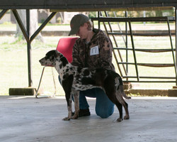 1st place 9-12 month females