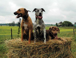 Rodeo, Kenzie and Angus