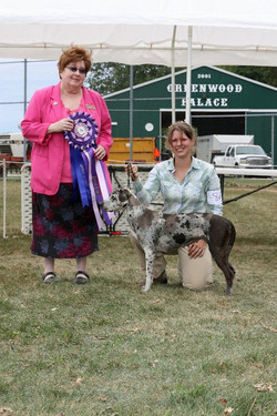 Reserve Best In Show