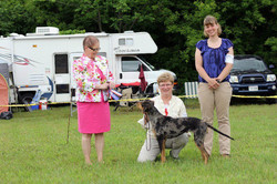 Best of Breed & New Champion