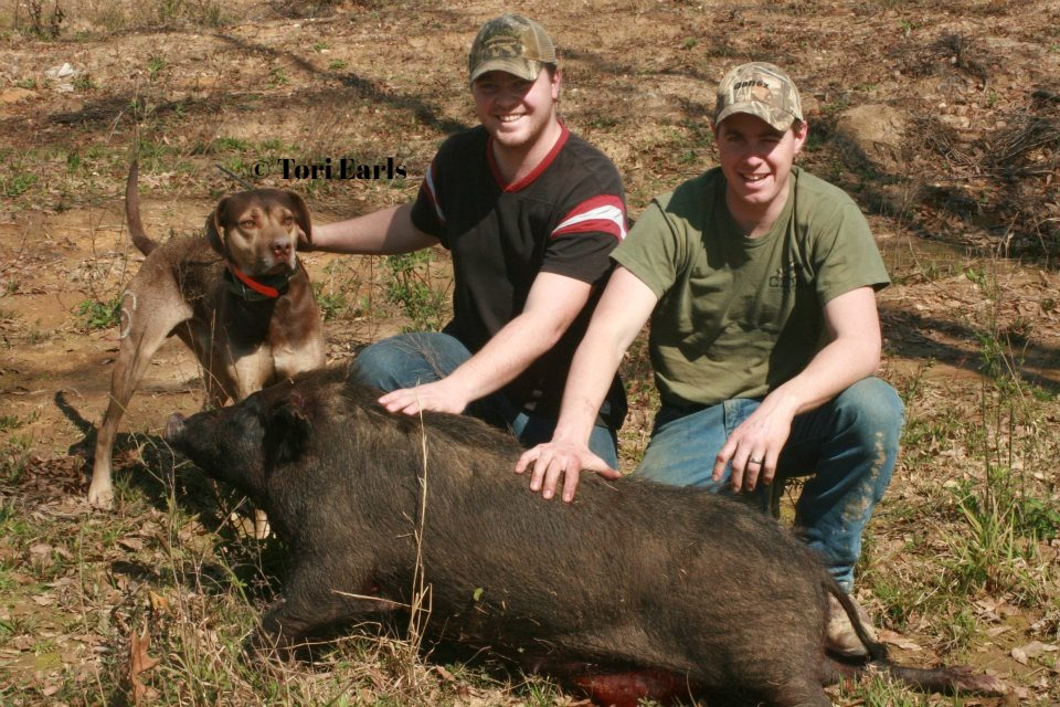 Angus with his sow