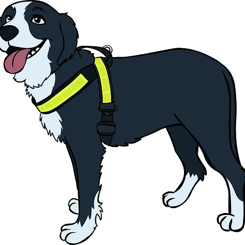 "Reflective Harness 2"" width"