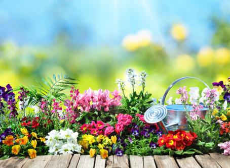 Summer Garden Collection - Colorful Summer Garden Flowers