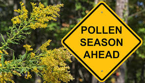 The Coming Of Spring and Allergies