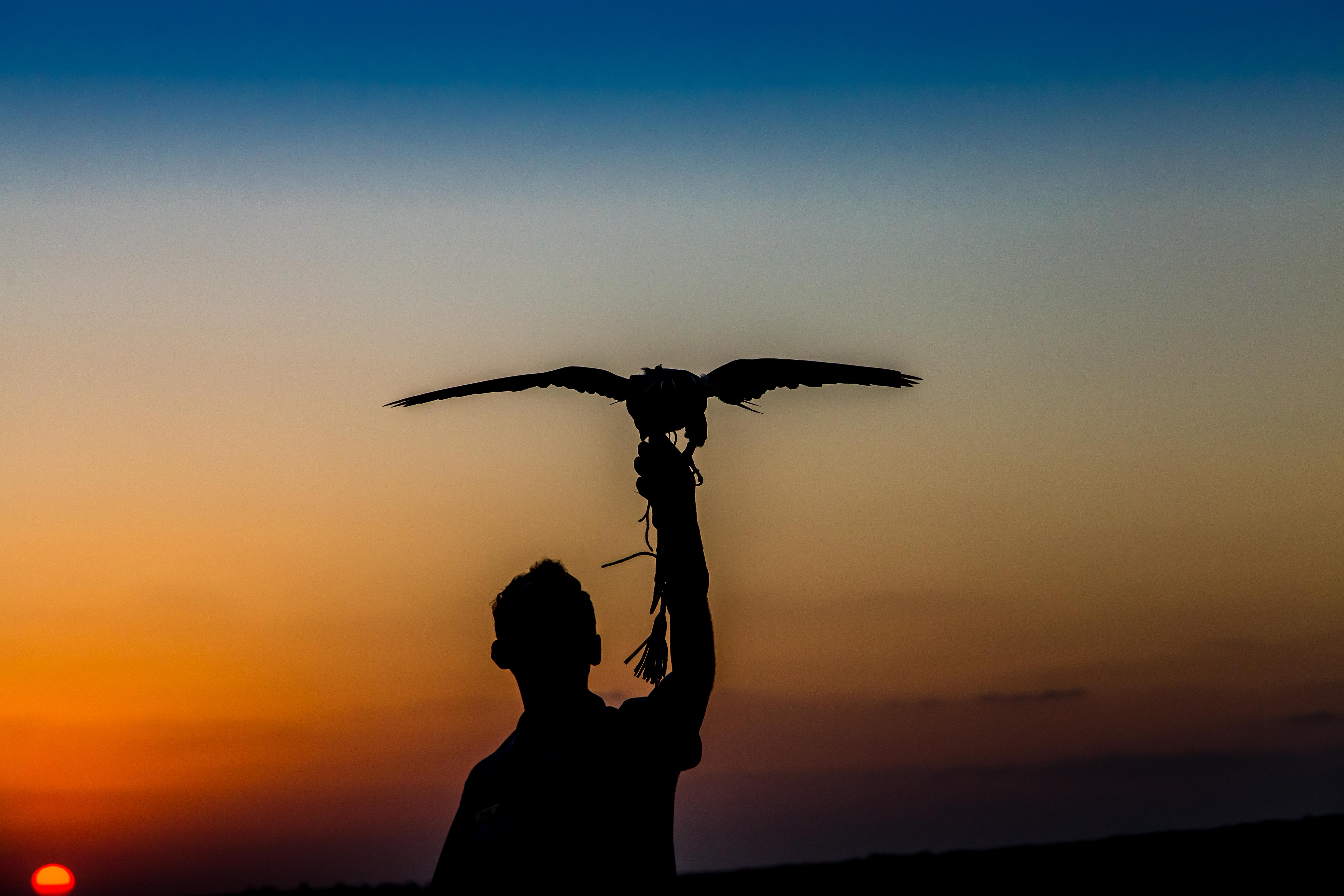 Sunset Falconer