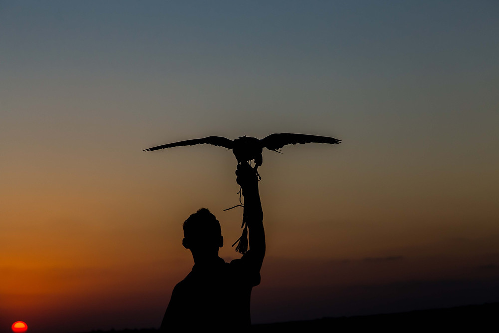 A falconer shows us his skills in the desert, hosted by the Al Maha Resort