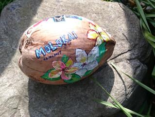 ココナッツ届きました♪