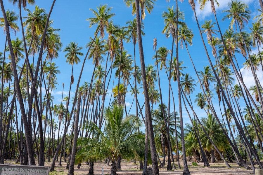 2019 8-29 Coconuts Grove Photo.jpg