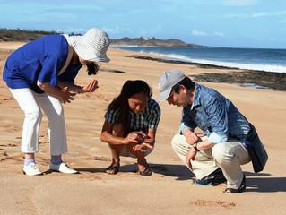 5キロの砂浜とプルメリア