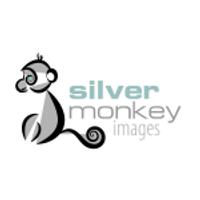 Silver-Monkey-e1548548749238.png