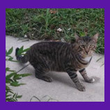 Lost cat found in Davenport, Florida with help of pet psychic.