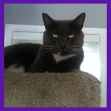Linden, Michigan missing cat coaxed home with help of pet psychic.