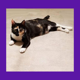 Chandler, Arizona lost, scared cat is  found with help of pet psychic.
