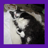 Missing Ohio foster cat located after six weeks with the help of volunteers and animal communicator.