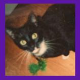 Riverside California cat found Marcelle.jpg