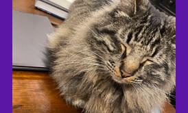 El Reno, Oklahoma lost cat found with help of Pet Psychic