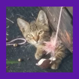 Missing kitten in Tavaras, Florida found after 5 months! Pet Psychic's description of missing kitten's location is spot on!