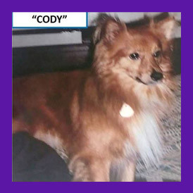 Dog escapes from Massachusetts inn. Dog is found with the help of animal communicator.
