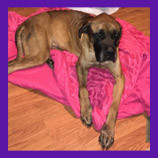 Corinth, Mississippi stolen dog recovered with help of pet psychic.