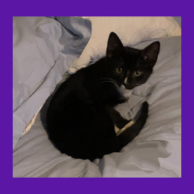Yonkers, New York two month old lost kitten found with the help of a pet psychic.
