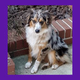 Cooper is safe thanks to to animal rescue volunteer and pet psychic.