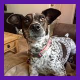San Luis Obispo, California lost dog found with help of animal communicator.