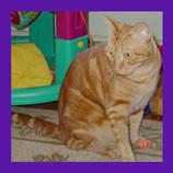 Billeria Massachusetts cat found.jpg