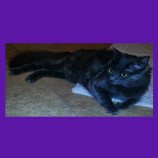 Missing kitten in Morristown, New Jersey coaxed home with help of animal communicator.