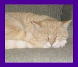 Cornwall Bridge Florida cat recovered from neighbor.jpg