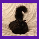 Pet Psychic helps Huntington Beach, California woman find her missing cat Ziggy Stardust.