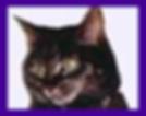 cats, cat medium, cat psychic readings, cat medium readings, cats in spirit