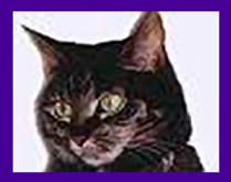 cats, cat medium, cat psychic readings, cat medium readings, cats in spirit