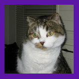 Find out how this cat stumpted the Pet psychic, Seattle, WA.jpg