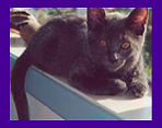 Missing California kitten located by Pet Psychic.