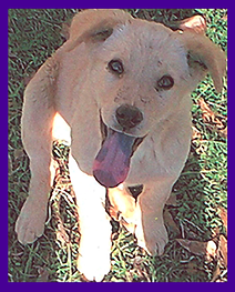 Stolen dog, Mississippi, Pet Psychic, animal communication, stolen dog recovery, pet tracking