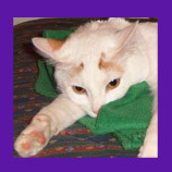Amherst, Massachusetts missing cat found with help of animal communicator. Cat owner writes a glowing testimonial.