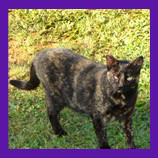 Another feral cat recovered in Kapaa, Hawaii with help of animal communicator.
