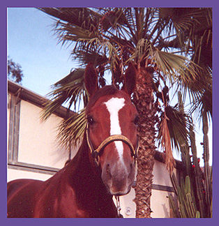 What is Animal Communication, brown horse, Coto de Caza, California