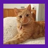 Camano Island, Washington missing cat found with help of Animal Communicator. Cat owner gets goosebu