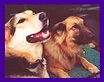 Dog Aggression How To Solve, When Dogs Do Not Get Along