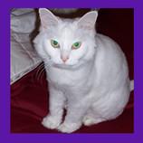 Phoenix Arizona cat rescued.jpg