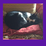 Houston, Texas skittish missing cat found with help of pet psychic. Read testimonial from relieved o