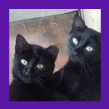 Gaithersburg Maryland feral cats rescued