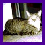 Rosedale Maryland cat found hiding under porch.jpg
