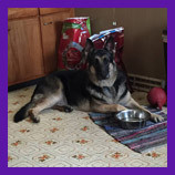Lake Station, Indiana lost dog found with help of pet psychic.