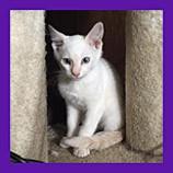 Bloomington, Indiana missing kitten found by animal communicator