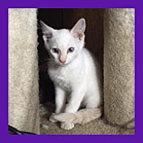 Bloomington, Indiana lost kitten found in 10 minutes by Animal Communicator