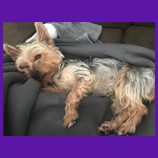 Charlotte, North Carolina missing dog found with aid of pet psychic.